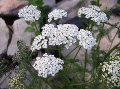 Health, Flowers, Plants, Medical, Cosmetics, Tips, Health Care, Medicine, Plant
