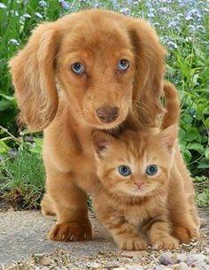 kediler ve köpekler.. ;)