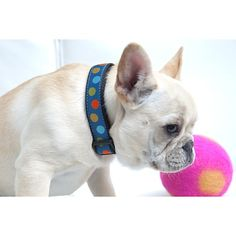 Isabella Cane Woven Ribbon Dog Collar - Blue Dots
