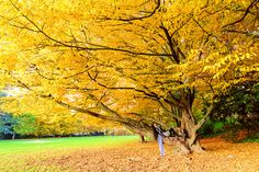 Under tree by Viktor Goloborodko on 500px