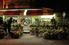 vendimia de flores en xantolo #xantolo #huastecapotosina