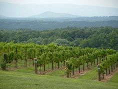 Raffaldini Vineyard and Winery - North Carolina--beautiful! Wine Vineyards, North Carolina Homes, Blue Ridge Mountains, Wine Country, East Coast, Future House, In This World, Farmer, Acre