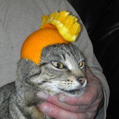 Punk citrus cat