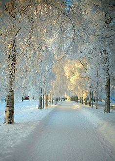 The white road..