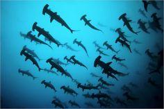 diving.... #brilliant