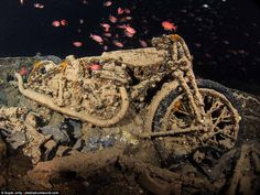 A single Norton motorcycle surrounded by fish, with its outline almost perfectly preserved by the debris