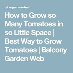 How to Grow so Many Tomatoes in so Little Space | Best Way to Grow Tomatoes | Balcony Garden Web