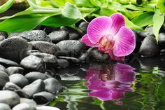 zen stones and orchid and water
