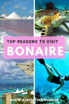 One of the world's top shore diving destinations, there are many more things to do in Bonaire, Dutch Caribbean besides scuba dive! Whether you're visiting on a cruise excursion or planning a winter vacation, be sure to check out our guide to the top thing Caribbean Vacations, Caribbean Cruise, Caribbean Honeymoon, Southern Caribbean, Beach Vacations, Best Travel Guides, Travel Tips, Travel Ideas, Travel Articles