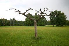 białówieski park narodowy