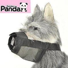 QINF High Quality Nylon Muzzle for Dogs Size XS ^^ Discover this special dog product, click the image : Dog muzzle Dog Dental Care, Dog Care, Dog Muzzle, Pet Dogs, Pets, Dog Itching, Dog Training Pads, Dog Food Storage, Dog Shower