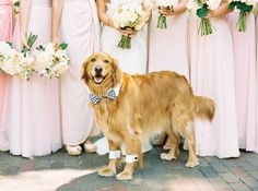 The dog of honor in his bowtie