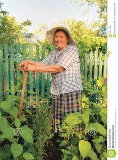 Old Woman Working In The Garden Royalty Free Stock Images - Image ...