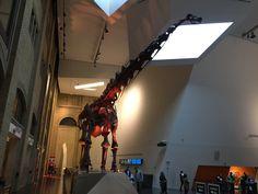 Royal Ontario Museum Royal Ontario Museum, Track Lighting, Ceiling Lights, Home Decor, Decoration Home, Room Decor, Outdoor Ceiling Lights, Home Interior Design, Ceiling Fixtures