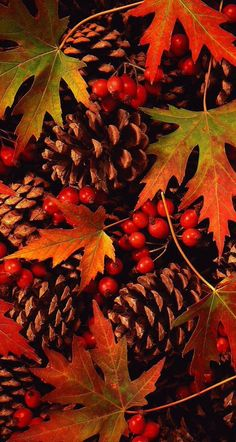 Gorgeous Fall,....♥♥... Autumn orange garden...leaves, berries and pine cones Follow our unique garden themed boards at www.pinterest.com/earthwormtec Follow us on www.facebook.com/earthwormtec for great organic gardening tips If you want to learn more about us and see how we are improving the food waste cycle and creating premium quality gardening products for increased landscaping, gardening and farming production...visit us at www.earthwormtechnologies.com
