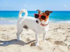 How to have fun in the sun without your dog getting sunburned