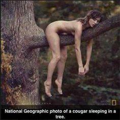 :) Sleepy Cougar...