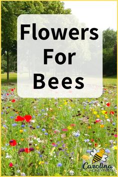 Hydroponic Gardening Help all pollinators. Chose the best flowers for honey bees and other pollinating insects. Honey Bee Flowers, Best Flowers For Bees, Amazing Flowers, Hydroponic Gardening, Gardening Tips, Organic Gardening, Container Gardening, Gardening Websites, Gardening Quotes