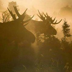 A Foggy Morning Print by Tim Grams