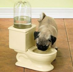 Toilet Water Bowl...oh HELLS NO, I like fresh water, but NEVER outta the toilet GROSS even for a street dog like me.