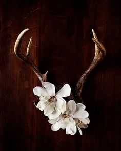 love the floral mixed with antlers. print by kari herer