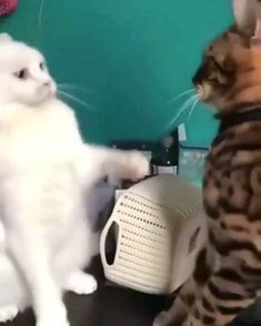 😻😽😹🙀😺,Funny, , Funny Categories Fuunyy For Watch More videos visit Our Siteweb 👇👇👇 Source by thecutecatss. Super Cute Animals, Cute Funny Animals, Cute Baby Animals, Funny Dogs, Animals And Pets, Cutest Animals, Wild Animals, Love Pet, I Love Cats