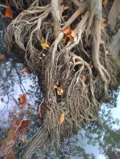 Roots- Image by Isabella Oswalt