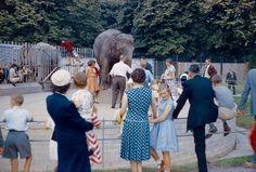 Feeding Komali and Jill 1964 Dublin Zoo, Dublin City, Ireland Homes, Online Tickets, Most Popular, One In A Million, Old Photos, Attraction, Couple Photos
