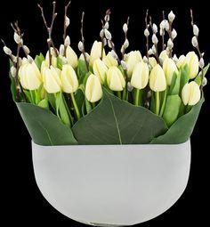White tulip hedge.