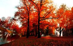 sunny autumn HD Wallpapers, Wallpapers For Desktop, Android, Iphone,nature wallpapers,anime wallpapers,car wallpapers
