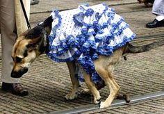 18-Oct-2013 11:03 - HONDENBELASTING GEEN DISCRIMINATIE. De eigenaars van Pico, Trixie, Loebas, Wammes en Fluffie kunnen vandaag hun lol op: Gemeenten mogen hondenbelasting heffen van de Hoge Raad. De poepende viervoeters kosten namelijk klauwen met geld. Per slot van rekening: wie ruimt de hondendrollen op die niet door de baasjes worden opgeruimd? De Hoge Raad meent dat de kosten gewoon moeten worden verhaald op hondenbezitters en ziet dat niet als discriminatie. Het kost de gemeente...