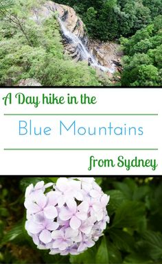 A self guided hike in Blue Mountains of Australia: A self guided hike in Blue Mountains of Australia Australia Travel