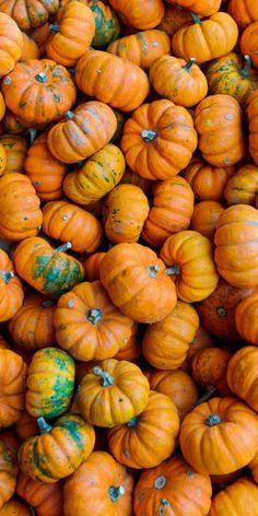 Orange | Arancio | Oranje | オレンジ | Colour | Texture | Style | Form | Pattern | Pumpkins