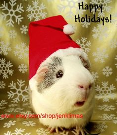 GUINEA PIG SANTA Unique Holiday Portrait  Limited by JenKlimas