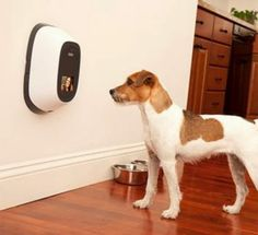3. Pet Chatz | 7 High-Tech accessories for your pet