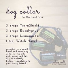 Flea and Tick dog collar DIY. Five Essential Oils to Ward off Mosquitos, Ticks and Other Insects. Learn how to make a mosquito and tick repellent with dōTERRA essential oils. Safe for humans of all ages and dogs. DIY Homemade Bug Spray for ants, chiggers, Essential Oils For Babies, Essential Oil Uses, Young Living Essential Oils, Tick Repellent For Dogs, Insect Repellent, Mosquito Repellent For Dogs, Lice Repellent, Mosquito Spray, Handy Gadgets