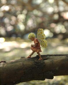 *Fairy