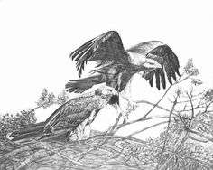 Eagles nesting  Lithographs of original pencil by GIFTofTheSUN