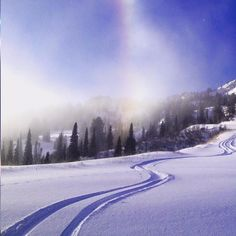 Tasty, tasty fresh tracks. Repost @snowbasin #fun #beauty #happy #art #snow #friends #love #travel #awesome #instamood #nature