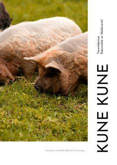 Flipsnack | Kune Kune by Stephanie Wolfsteiner Brown Bear, Pork, Animales