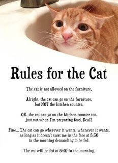 Cats Rule: Rules For the Cat (Established By the Cat)