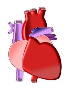 Sağlık Galeri: Kalp Damar Hastalıklarına Yakalanan Kişi Sayısı Ar...