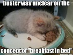 Breakfast in bed - cat style I Love Cats, Cute Cats, Funny Cats, Funny Animals, Cute Animals, Animal Captions, Funny Animal Photos, Funny Cat Pictures, Animal Pics
