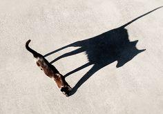 ninja cat by Robert Couse-Baker