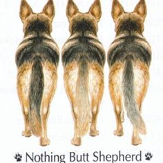 I have three shepherds :)