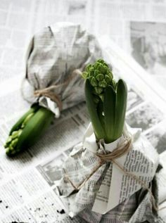 Hyacinth bulbs * Wrapped in paper and twine * What a wonderful gift to give and receive