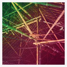 bamboo, vernecula