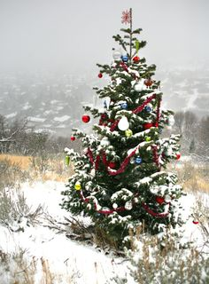 decorating christmas for large areas | This evergreen tree, growing beside the Bonneville Shoreline Trail in ...