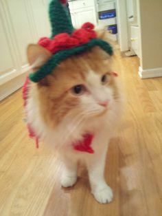 Live. Love. Laugh.: Santa's Little Helper Cat!