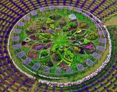 Lavender Labyrinth at Cherry Point Farm in Shelby